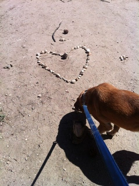 Image of dog checking out a heart made of pebbles.